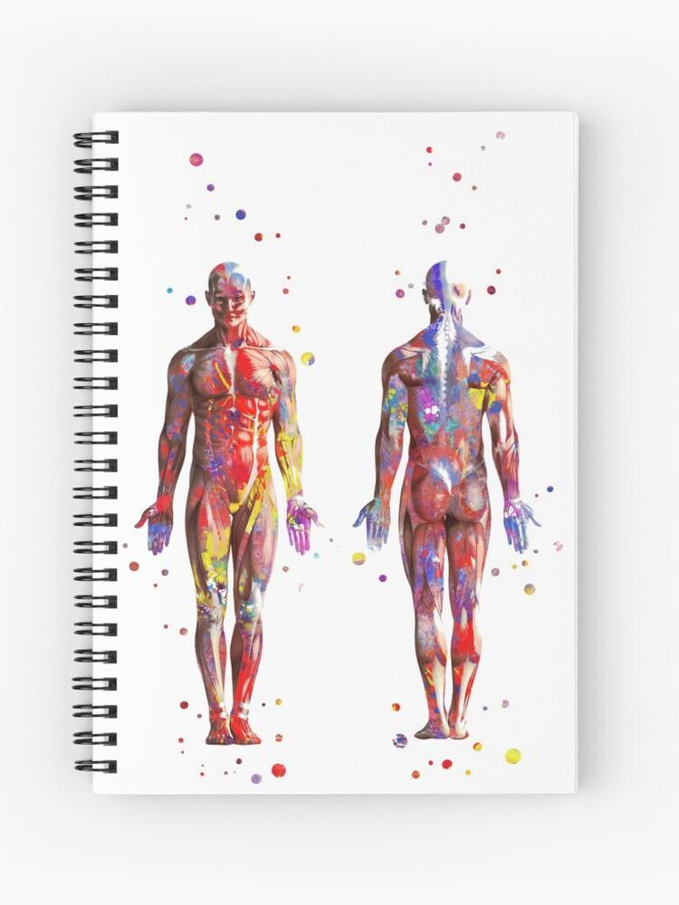 Muscular System, watercolor anatomy art, human muscles, medical art, man  body | Spiral Notebook