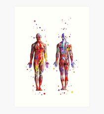 Système musculaire, art de l'anatomie aquarelle, muscles humains, art médical, corps de l'homme Impression artistique