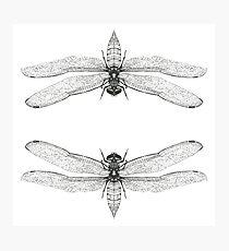 Dragonfly Art Print Photographic Print