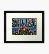 Chicago Tulips Framed Print
