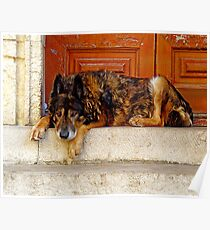"""""""Wolf-Dog of Arles"""" Poster"""