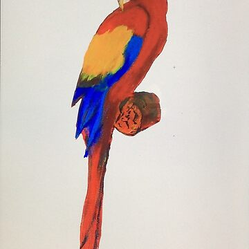 Macaw t shirt by parko
