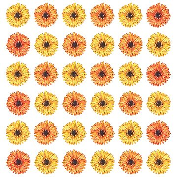 Colorful Gerbera Daisy Flower Pattern by erika-lancaster