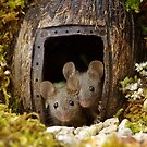 two wild mouse at the  wood pile door  by Simon-dell