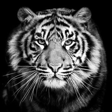 Tiger by lvsworks
