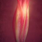 Lily With Mulled Wine Tones by Christine Lake
