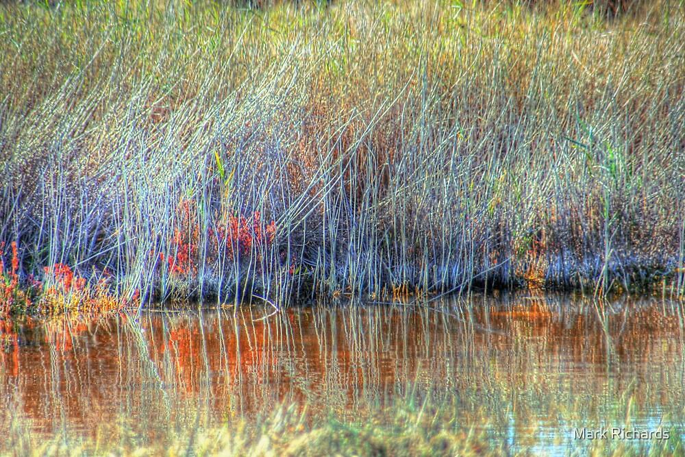 Wetland Grasses by Mark Richards