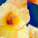 Orange Gladiolus by Alison Cornford-Matheson