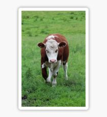 Brown and White Cow Sticker