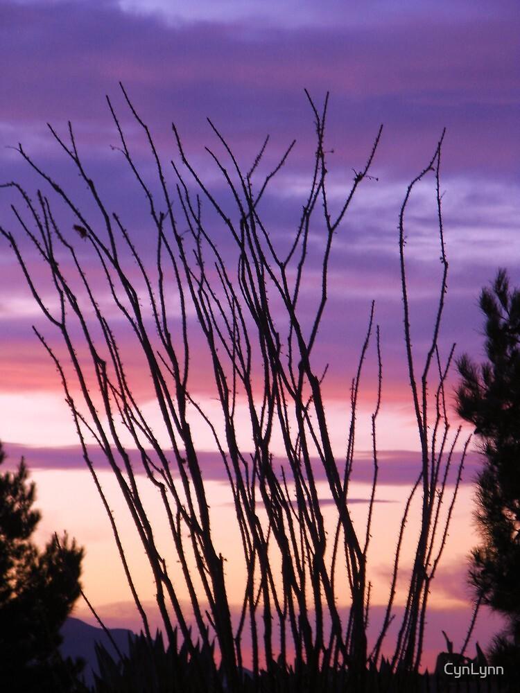 Desert Silhouettes, Ocotillo by CynLynn