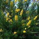 Goldene Blüten von BlueMoonRose
