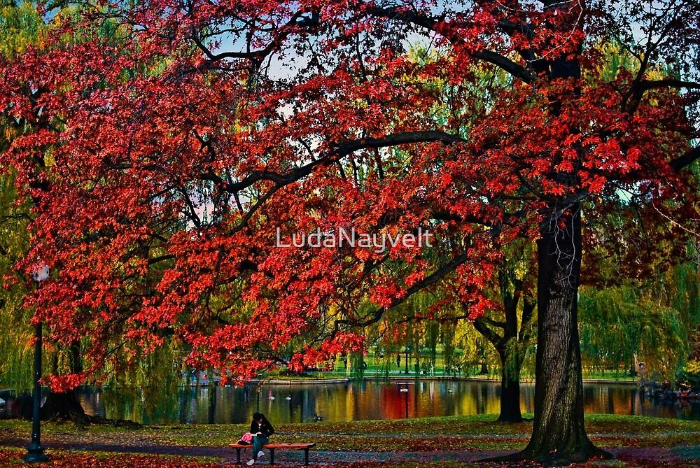 Boston Public Garden by LudaNayvelt