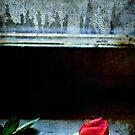 Misty rose II by Silvia Ganora