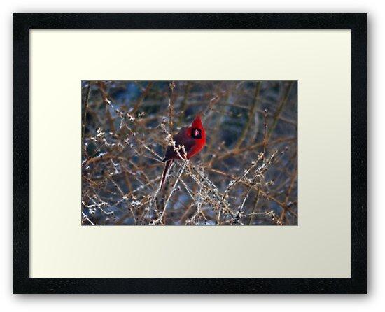 Christmas Bird by Anne Smyth
