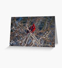 Christmas Bird Greeting Card