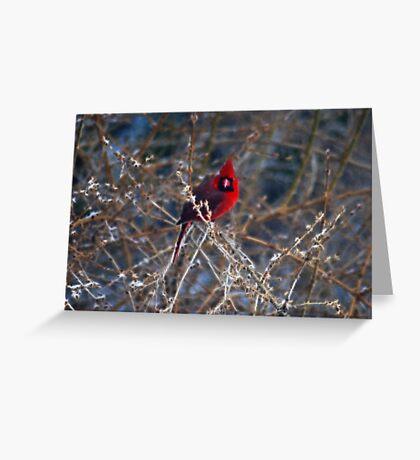 Christmas Bird Greeting Card