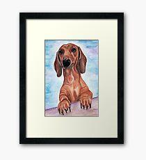 dachshund Max  Framed Print