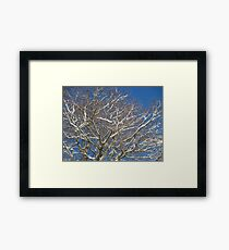 Snowy Branches Framed Print