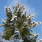 Snowy Trees by Jennifer J Watson