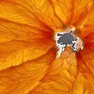 Grapefruit VI by Inés Montenegro