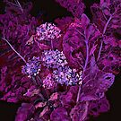 Hydrangea and Horseradish, Floral Art Black Purple by clipsocallipso