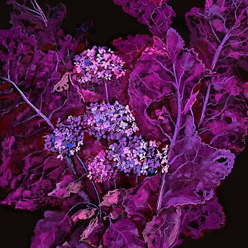 Hydrangea and Horseradish, Floral Art, Black Purple by clipsocallipso