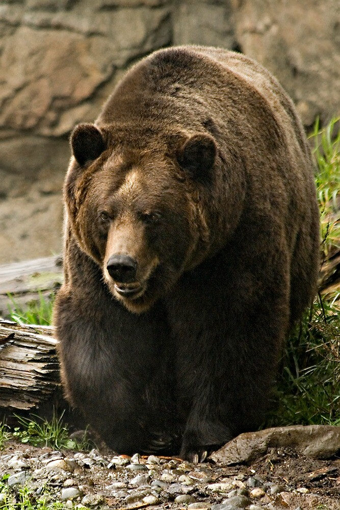 Benjamin....aka Benny the Bear by TeresaB