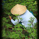 Bonsai  by tracyleephoto