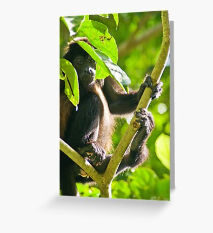 Kickin' Back in the Jungle Greeting Card