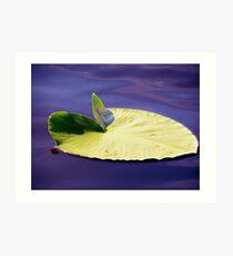 Lillypad Art Print