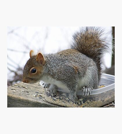 Gray squirrel checking me out. Photographic Print