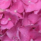 Pretty Pink by Christine Lake