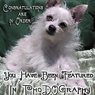 PhoDOGraphy Banner Challenge Entry by Rhonda Strickland