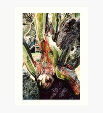 Old Man Snowgum with coloured bark Art Print