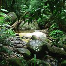 mossman gorge queensland by dmaxwell