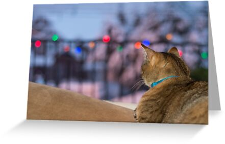 Waiting for Santa by Tracy Riddell