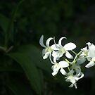Tropical Flower by DavidWayne