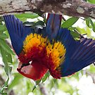 Upside-down Macaw by Tracy Riddell