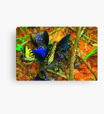 Butterfly luncheon Canvas Print