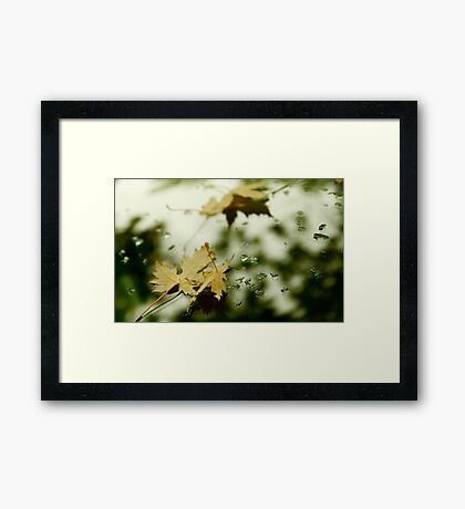 Leaves and Drops Framed Print