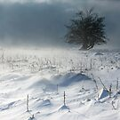 Tree in a Blizzard by Rory Trappe