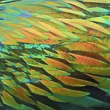Nicobar Pigeon by Carole-Anne
