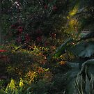 Backyard Light #2 by James McCarthy