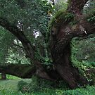 Tree Study #2 by James McCarthy