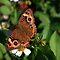 Beautiful Butterflies and Moths