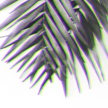 Palm leaves background. Black and white photography. Glitch effect. by Edalin
