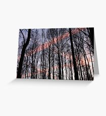 Criss Cross Contrails Sunset Within The Trees 09 Greeting Card