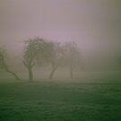 Morning Frost and Fog by Joe Mortelliti