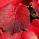 Simply Red by John Dalkin