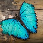 Weathered wings by vfphoto
